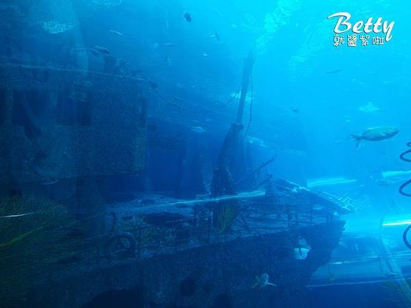20170819國立海洋生物博物館 (23).jpg