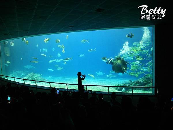 20170819國立海洋生物博物館 (31).jpg