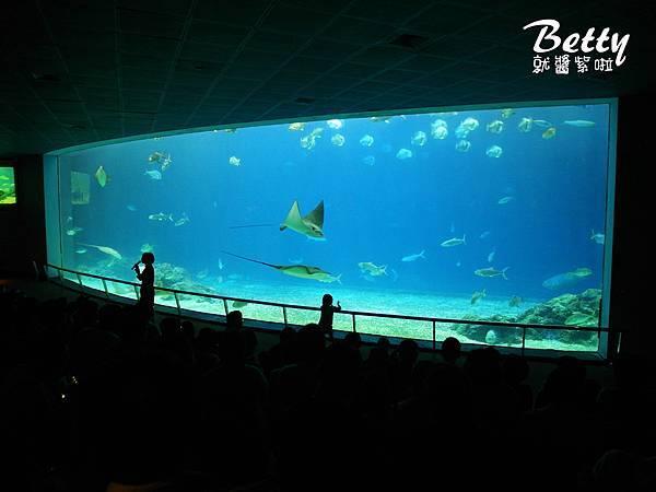 20170819國立海洋生物博物館 (30).jpg