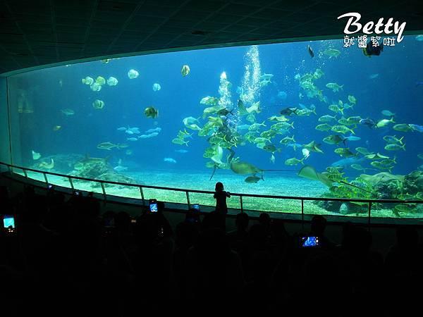 20170819國立海洋生物博物館 (32).jpg