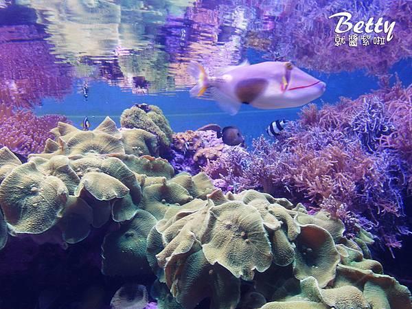 20170819國立海洋生物博物館 (29).jpg