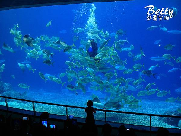 20170819國立海洋生物博物館 (34).jpg