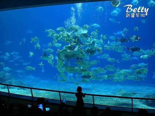 20170819國立海洋生物博物館 (33).jpg