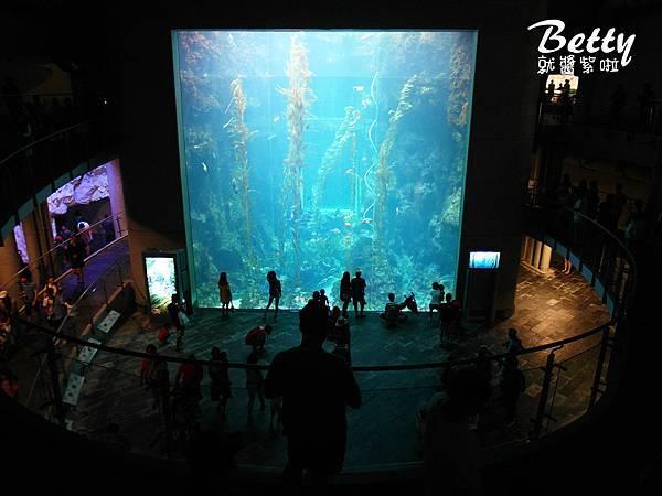 20170819國立海洋生物博物館 (40).jpg