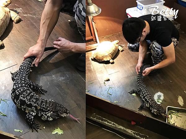 20180415胖鬣蜥原味廚房 (3).jpg