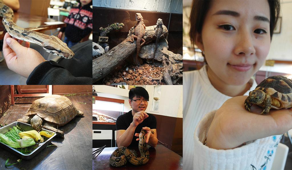 20180415胖鬣蜥原味廚房 (61).jpg