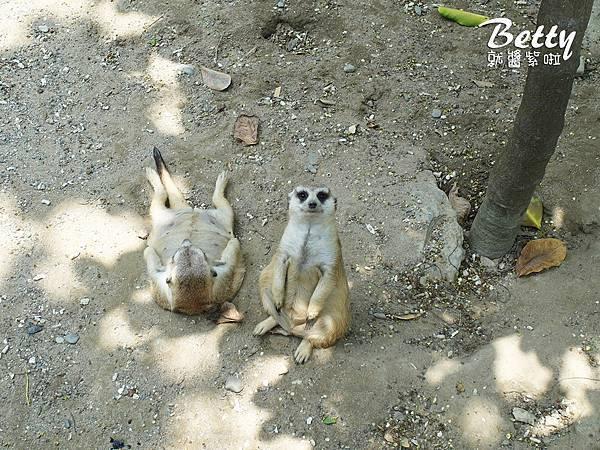 20180512頑皮動物園 (37).jpg