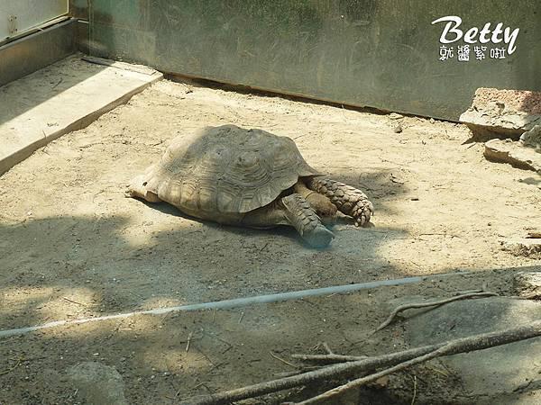 20180512頑皮動物園 (35).jpg