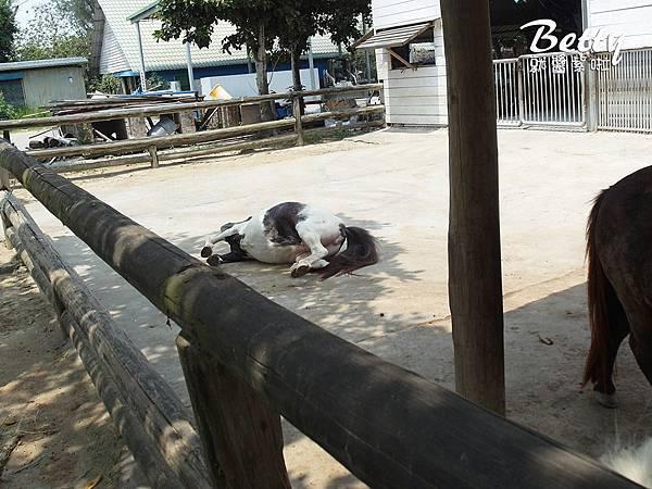 20180512頑皮動物園 (56).jpg