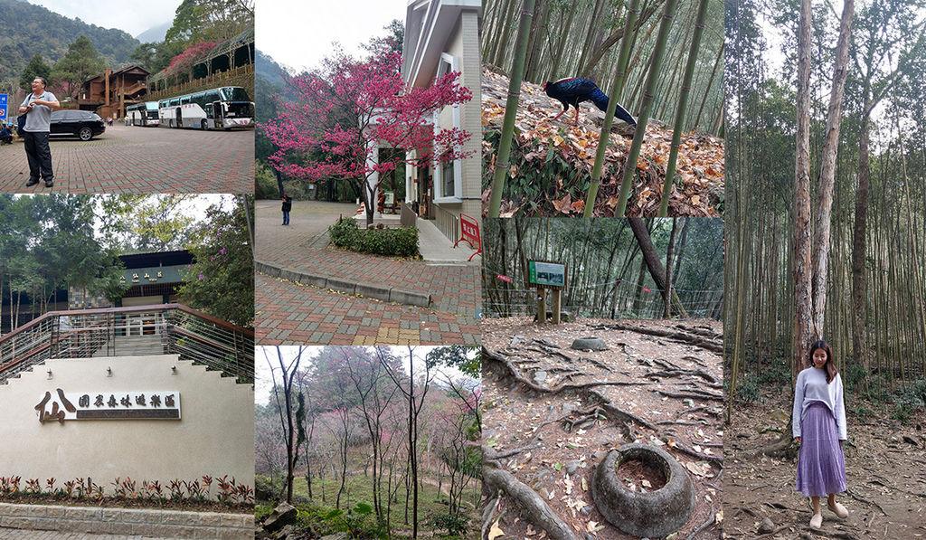 八仙森林公園.jpg