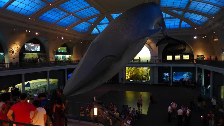 等比例藍鯨