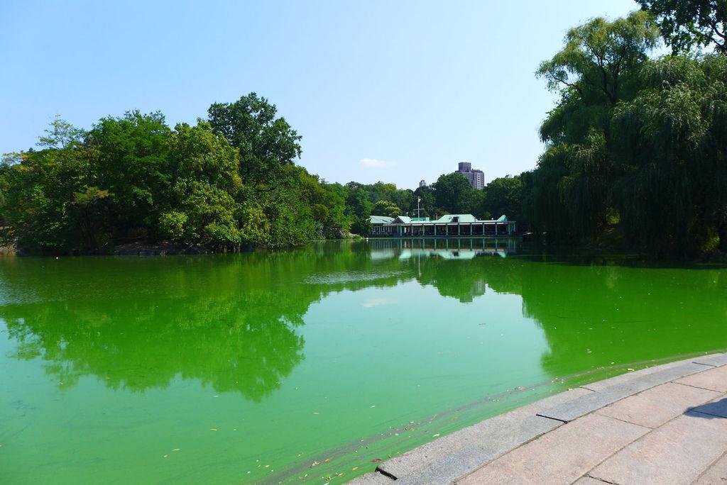 拍照起來很美的綠湖跟船屋餐廳