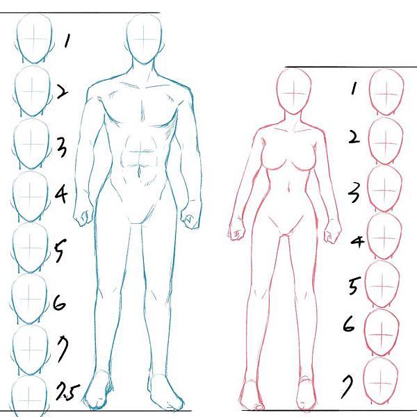 男女生身體畫法1.jpg