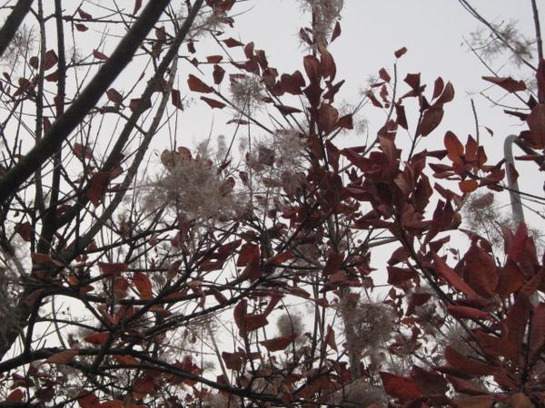 宿舍附近的樹