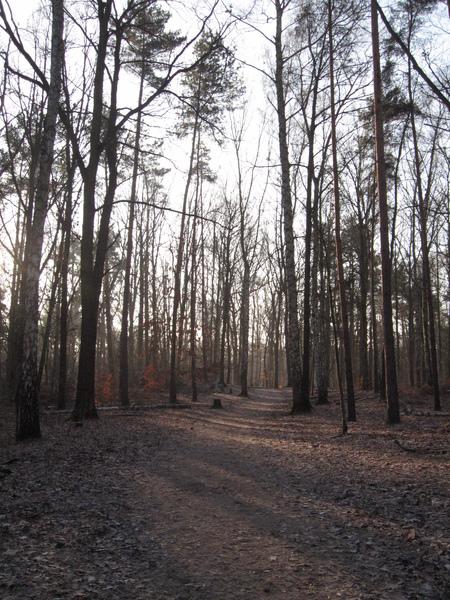 旅館附近的樹林