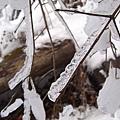 IMG_0425樹冰.JPG
