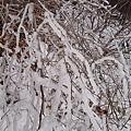 IMG_0446瀑布附近的水氣在樹枝上結凍而成.JPG