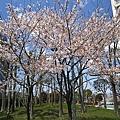 IMG_0611學校旁的公園.JPG