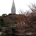 IMG_0364新宿御苑.JPG