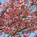 IMG_0952 不知名的花.JPG