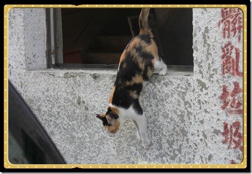 cat (85)