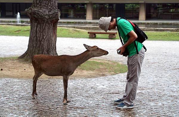 奈良的鹿會跟人點頭要吃的,但怎麼變成Mars在點頭?