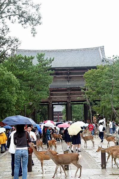 東大寺入口處