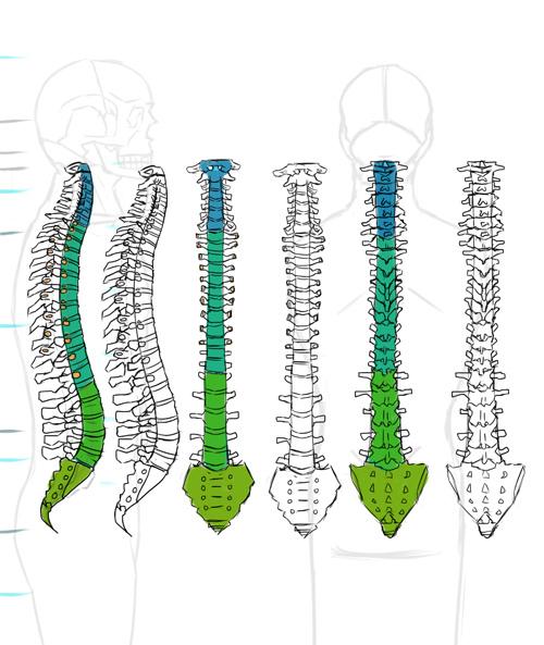spine-3.jpg