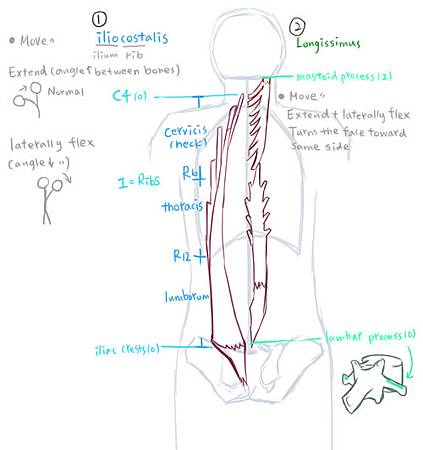 muscle of neck and Vertebral Column-2.jpg