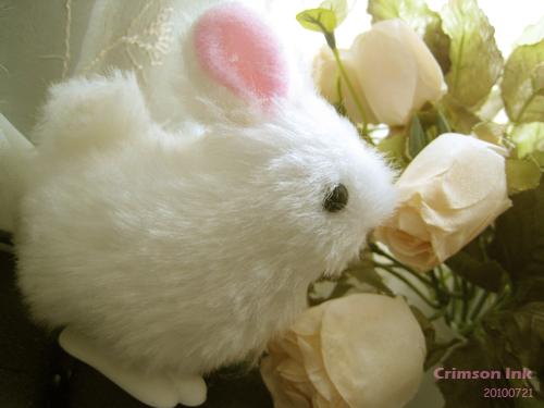 兔仔2.jpg