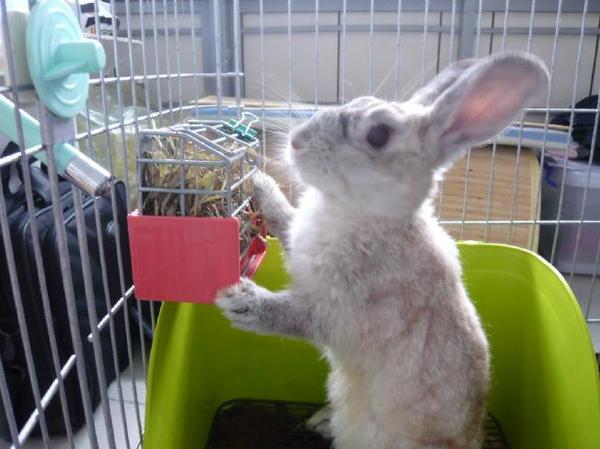 阿兔吃提摩西.JPG