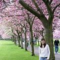 滿樹的櫻花+長的像混血兒的法蘭 說是在日本拍的也相信