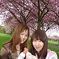 滿樹的櫻花,我真的好想回去喔