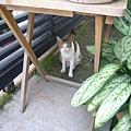 貓咪在這.jpg