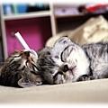 CRAZY CATS 001.JPG