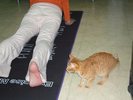 什麼是瑜伽.jpg