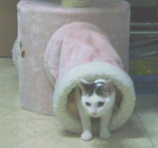 小昭的貓隧道初體驗.JPG