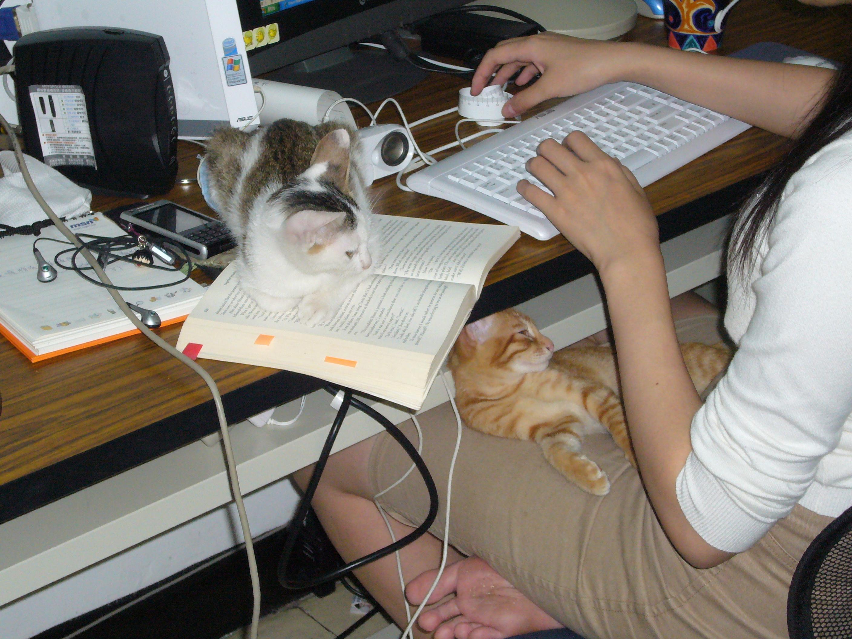 小兔工作桌.JPG