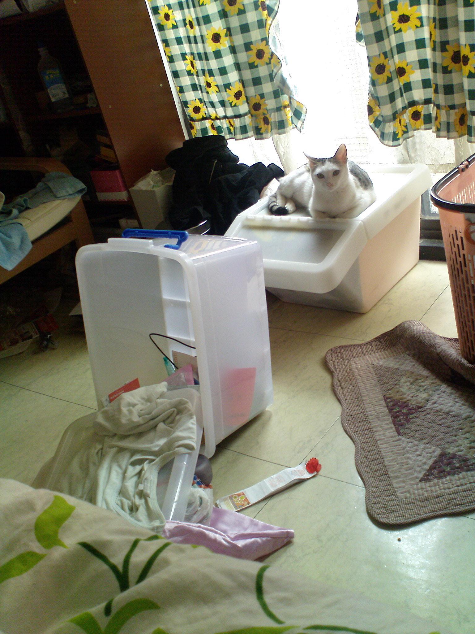 貓咪引爆核彈啦