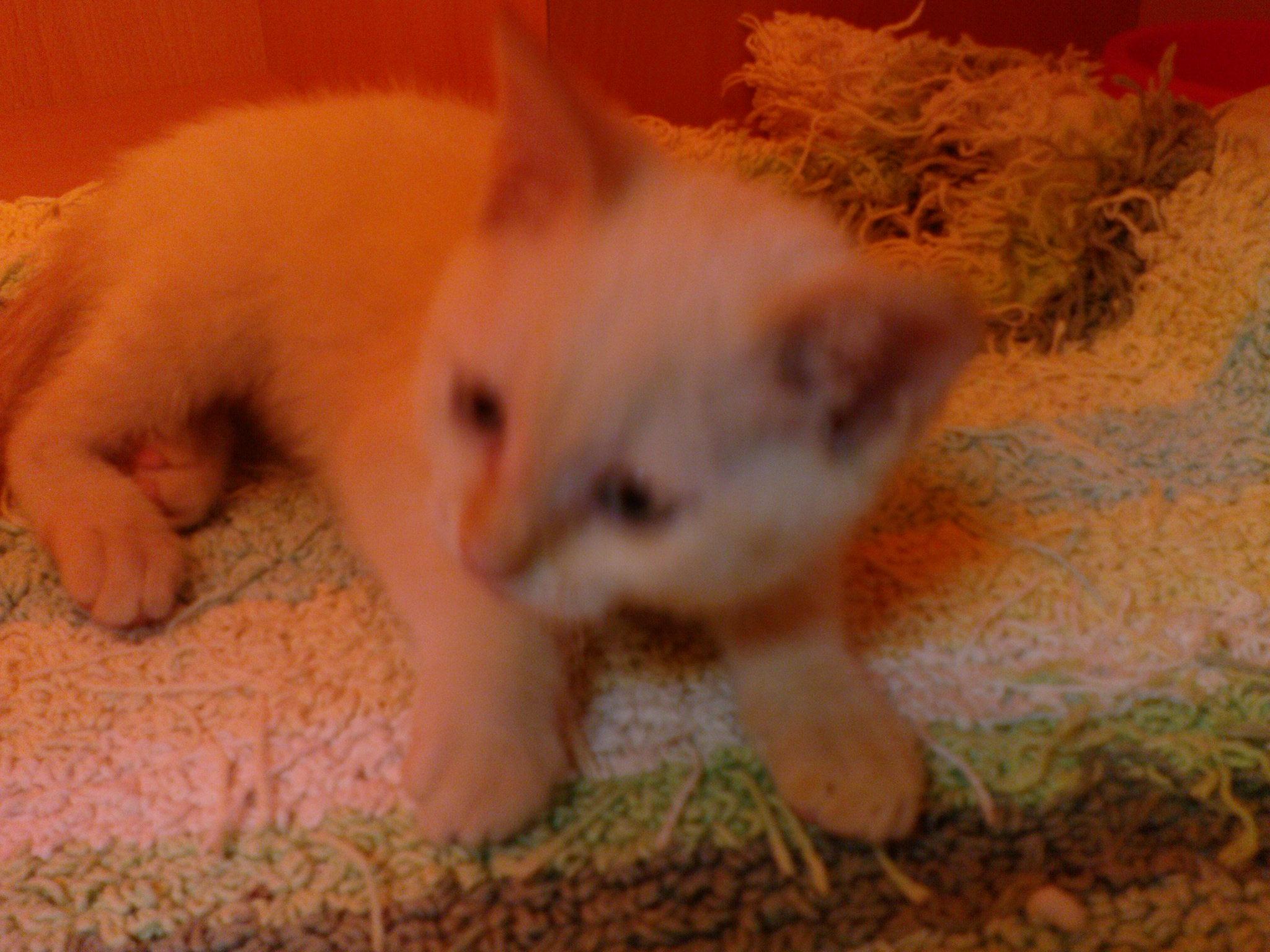 最有精神的小貓咪