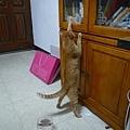 一條貓.jpg