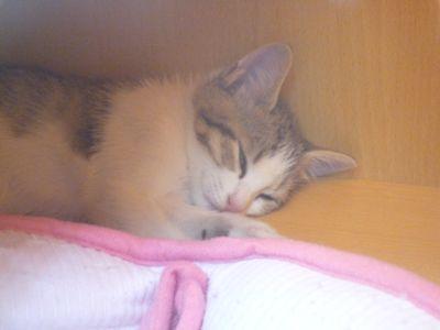 紫菜蛋花想睡覺.jpg