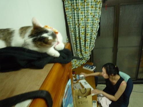 小昭在書櫃上睡.jpg