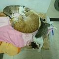 小貓也依賴噗唧.jpg
