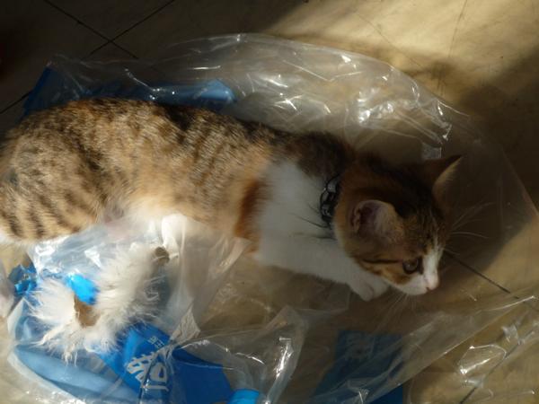 塑膠袋就可以玩一下午.jpg