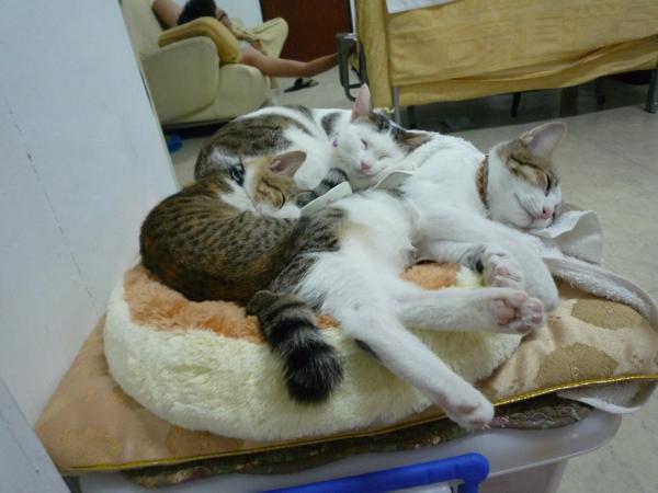 三貓一人睡死了.jpg