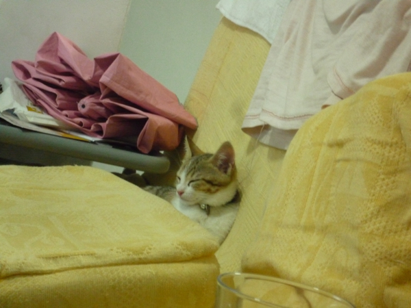 翻下來卡在沙發縫也舒服.jpg
