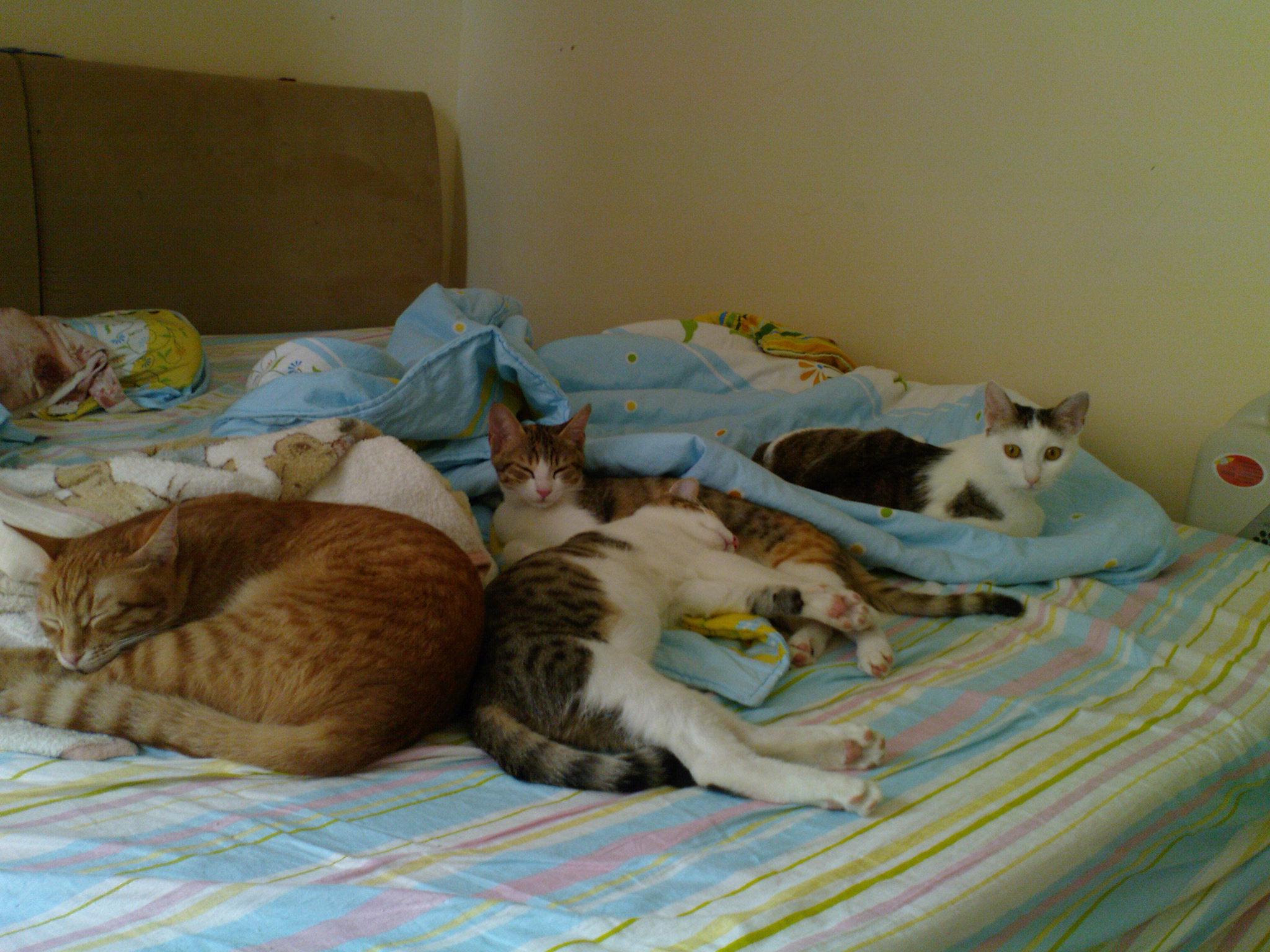 終於把四貓都拍進去了