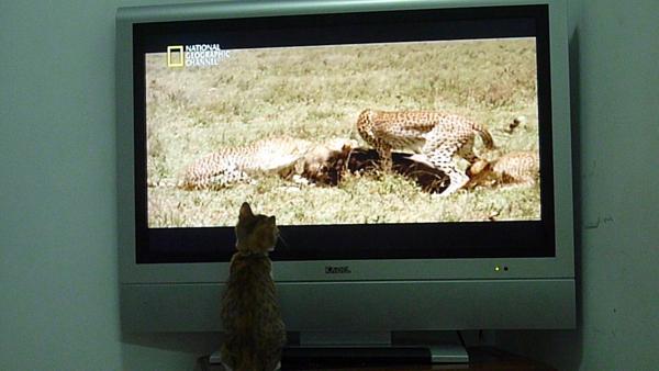 大豹與小豹.jpg