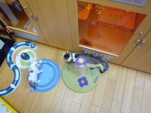 紫菜:小鬼的玩具還不少嘛